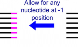 Image showing MINTmap accepts a nucleotide in position -1