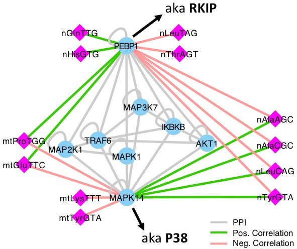 Race Disparities as shown by miRNA and tRNA Regulation in Triple Negative Breast Cancer